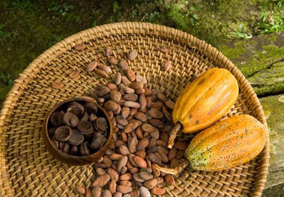 полезное какао
