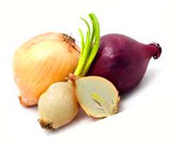 лечебные свойства лука