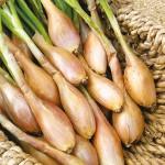 лук-шалот лечебные свойства